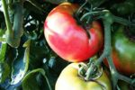 たった7日でルータイス式アファメーションが効いた!20年のトマト嫌いを克服したアファメーションのポイントまとめ!